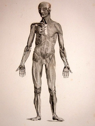 human_body_thumg